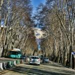 valiasr_street-1-b